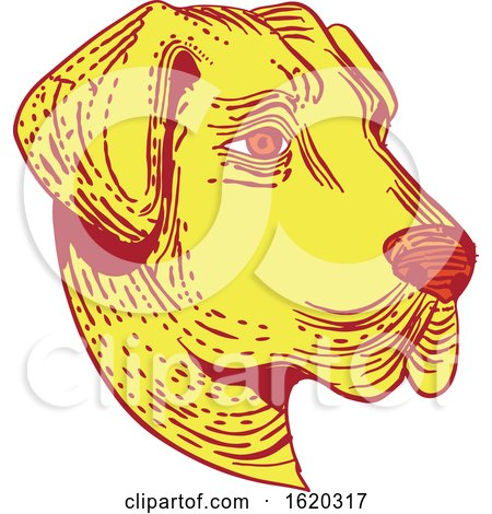 Anatolian Shepherd Dog Head Etching Color by patrimonio