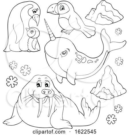 Arctic Animals Posters, Art Prints