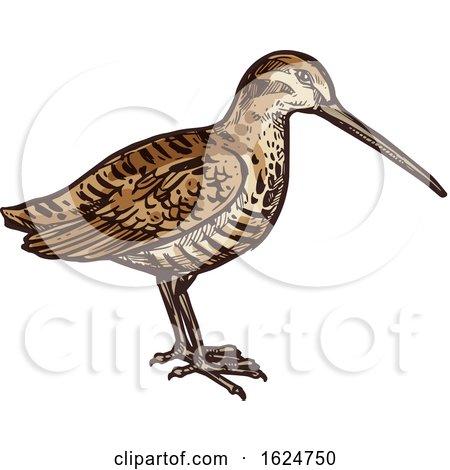 Sketched Bird by Vector Tradition SM