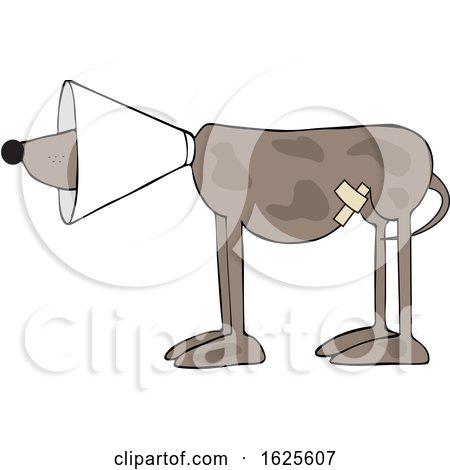 Cartoon Injured Brown Dog Wearing a Cone by djart