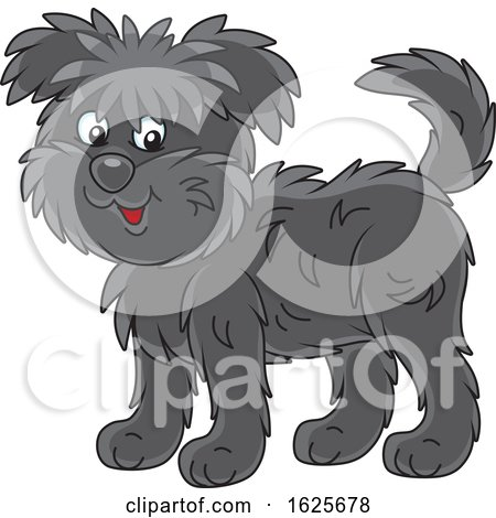 Black Affenpincher Monkey Terrier Dog by Alex Bannykh