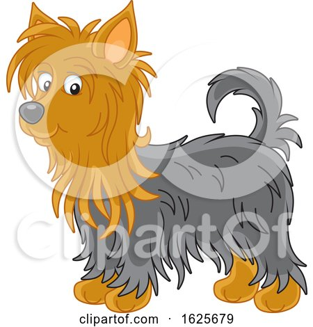 Tan and Black Australian Silky Terrier Dog by Alex Bannykh