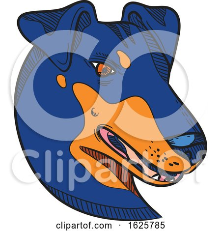 Manchester Terrier Dog Head Drawing Color by patrimonio