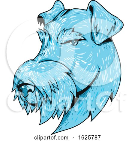 Bingley Terrier Head Drawing by patrimonio