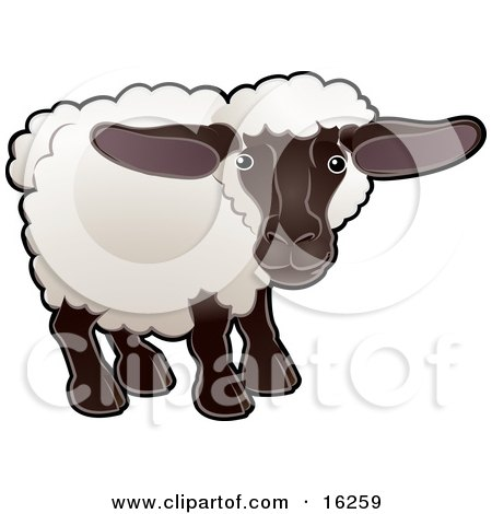 Adorable Female Sheep, An Ewe, With White Fleece, A Black Face And Legs  Posters, Art Prints
