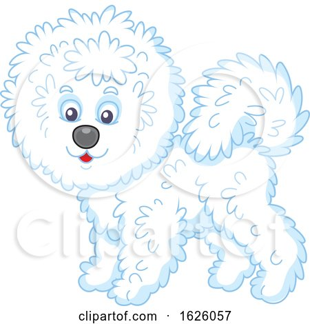 Bichon Frise Dog by Alex Bannykh