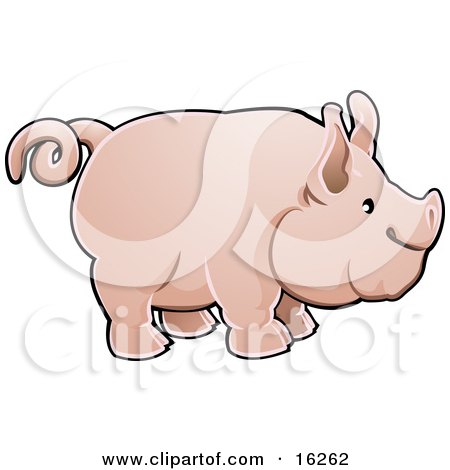 Adorable Big Pink Pig With A Curly Tail In Profile Clipart Illustration by AtStockIllustration