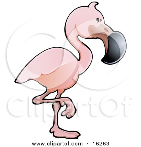 Adorable Pink Flamingo Bird With A Black Beak, Standing On One Leg  Posters, Art Prints