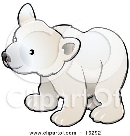 Curious White Arctic Polar Bear Cub (Ursus Maritimus)  Posters, Art Prints