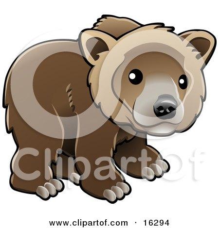 Kodiak Bear (Ursus Arctos Middendorffi), Brown Bear (Ursus Arctos), Or Grizzly Bear (Ursus Arctos Horribilis) Cub Looking Outwards Clipart Illustration Image by AtStockIllustration