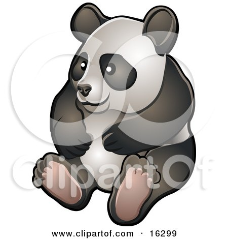 Happy Giant Panda Bear (Ailuropoda Melanoleuca) Sitting On Its Hind Legs In A Zoo  Posters, Art Prints
