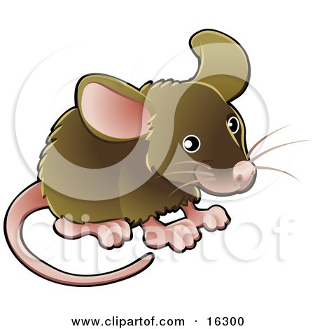 Little Brown Pet Mouse With A Pink Nose, Ears, Feet And Tail  Posters, Art Prints