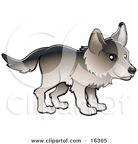 Timber Wolf in Profile  Posters, Art Prints