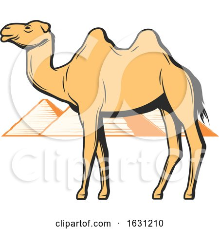 Camel and Egyptian Pyramids by Vector Tradition SM