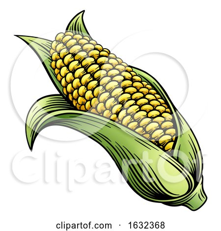 Sweet Corn Ear Maize Woodcut Etching Illustration by AtStockIllustration