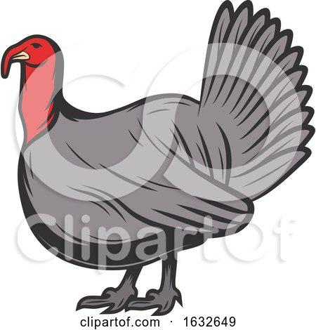 Retro Turkey Bird by Vector Tradition SM