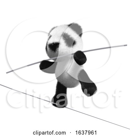 3d Panda Tightrope Walker, On a White Background by Steve Young