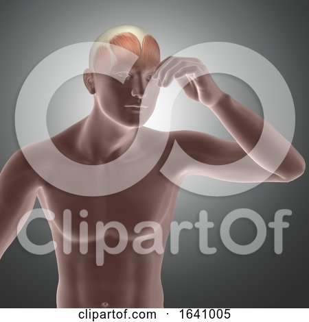 3D Male Figure with Muscles in Head Highlighted by KJ Pargeter