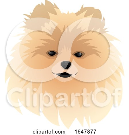 Spitz Dog Face by Morphart Creations