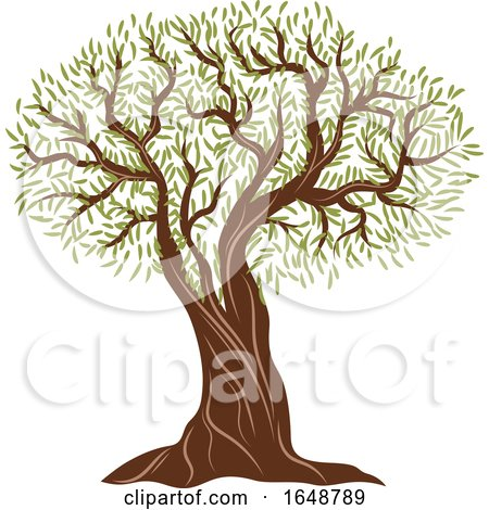 Olive Tree by Vector Tradition SM