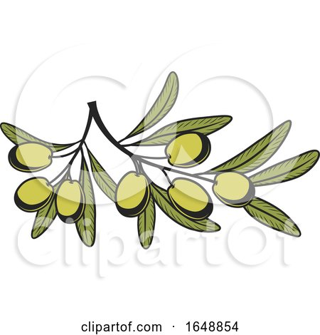 Green Olive Design by Vector Tradition SM