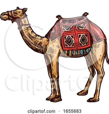 Sketched Egyptian Camel by Vector Tradition SM