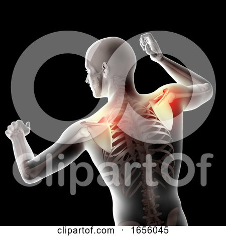 3D Male Medical Figure with Shoulder Blades Highlighted by KJ Pargeter