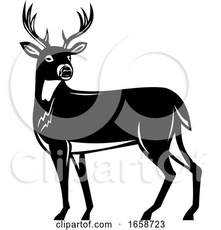 Whitetail Deer Side View Woodcut by patrimonio