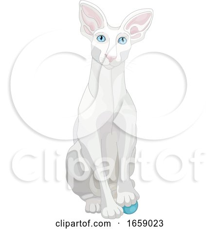 Cute White Oriental Shorthair Cat Resting a Paw on a Toy by Pushkin