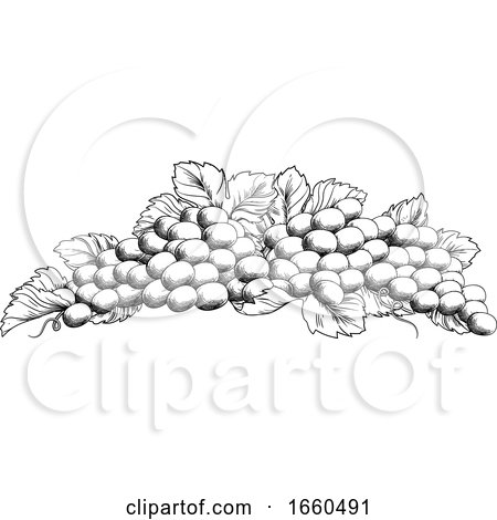Grapes Bunch Vine and Leaves Woodcut Etching Style by AtStockIllustration