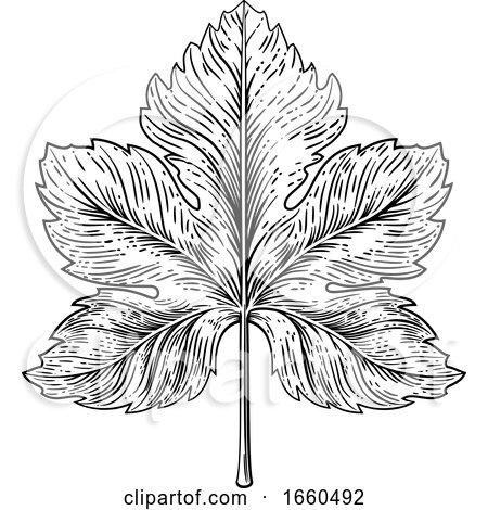 Grape Leaf Design Element Woodcut Engraving Style by AtStockIllustration