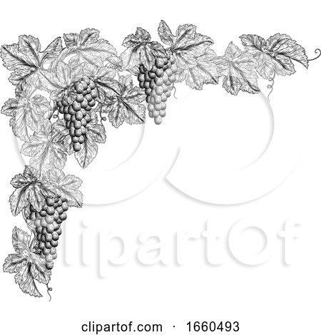 Grape Bunches on Vine Corner Border Design Element by AtStockIllustration