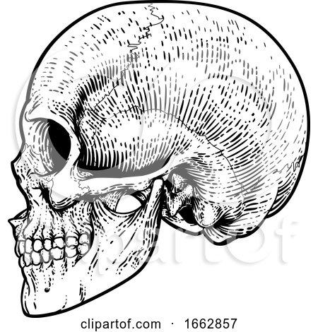 Skull Grim Reaper Vintage Woodcut Illustration Posters, Art Prints