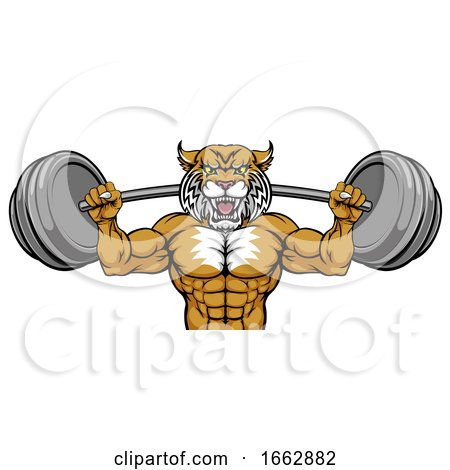 Wildcat Mascot Weight Lifting Body Builder by AtStockIllustration