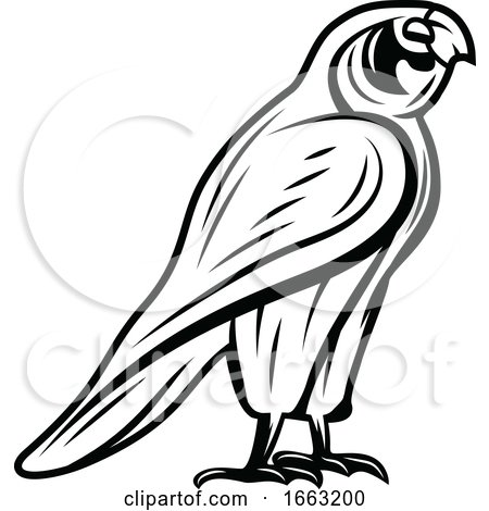 Black and White Egyptian Falcon by Vector Tradition SM
