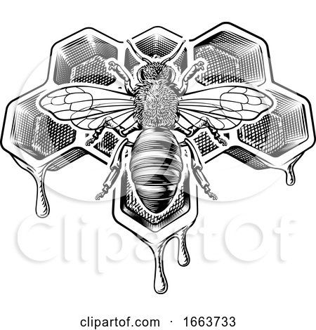 Honey Bumble Bee and Honeycomb Vintage Drawing by AtStockIllustration