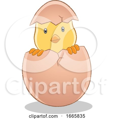 Hatching Easter Chick Posters, Art Prints