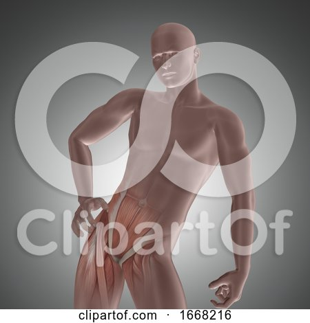 3D Male Figure with Hip Muscles Highlighted by KJ Pargeter