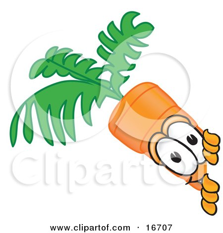 Clipart Picture of an Orange Carrot Mascot Cartoon Character Sneakily Peeking Around a Corner by Toons4Biz