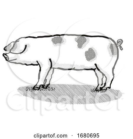 Gloucestershire Old Spots Pig Breed Cartoon Retro Drawing by patrimonio