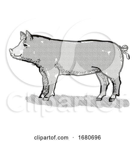 Berkshire Pig Breed Cartoon Retro Drawing by patrimonio