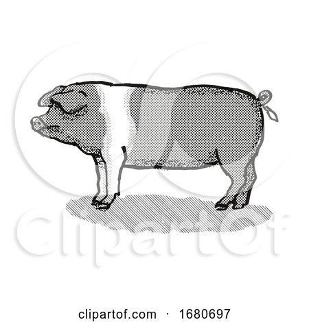 British Saddleback Pig Breed Cartoon Retro Drawing by patrimonio