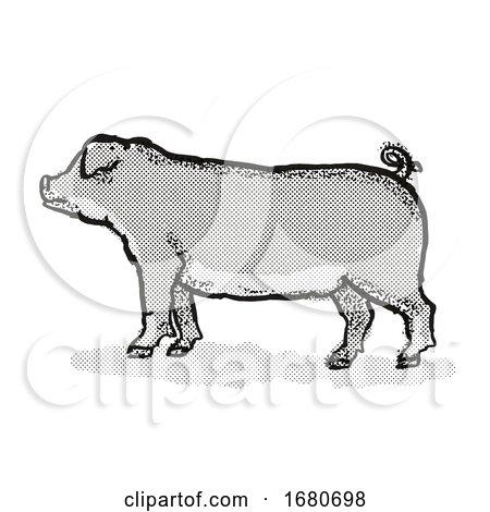 Duroc Pig Breed Cartoon Retro Drawing by patrimonio