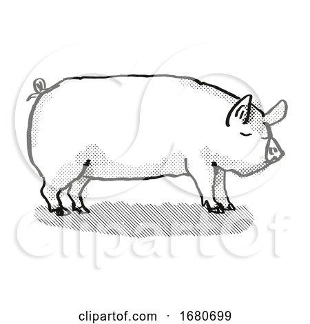 Middle White Pig Breed Cartoon Retro Drawing by patrimonio