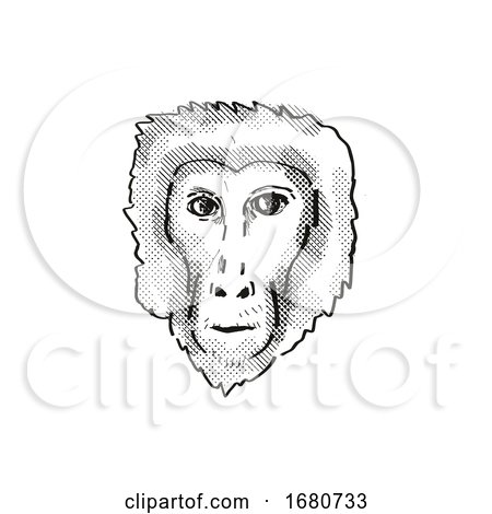 Assam Macaque Monkey Cartoon Retro Drawing Posters, Art Prints