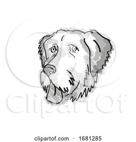 Aussiedoodle Dog Breed Cartoon Retro Drawing by patrimonio