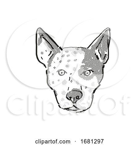 Australian Cattle Dog Dog Breed Cartoon Retro Drawing by patrimonio