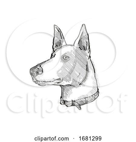 Ibizan Hound Dog Breed Cartoon Retro Drawing by patrimonio
