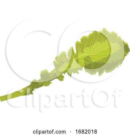 Light Green Lettuce Leaf by Morphart Creations