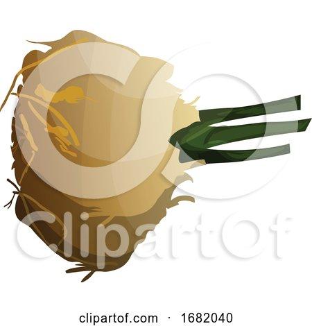 Cartoon Celeriac by Morphart Creations